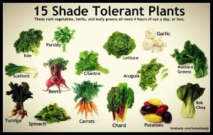 shade-tolerant-plants_04-02-13