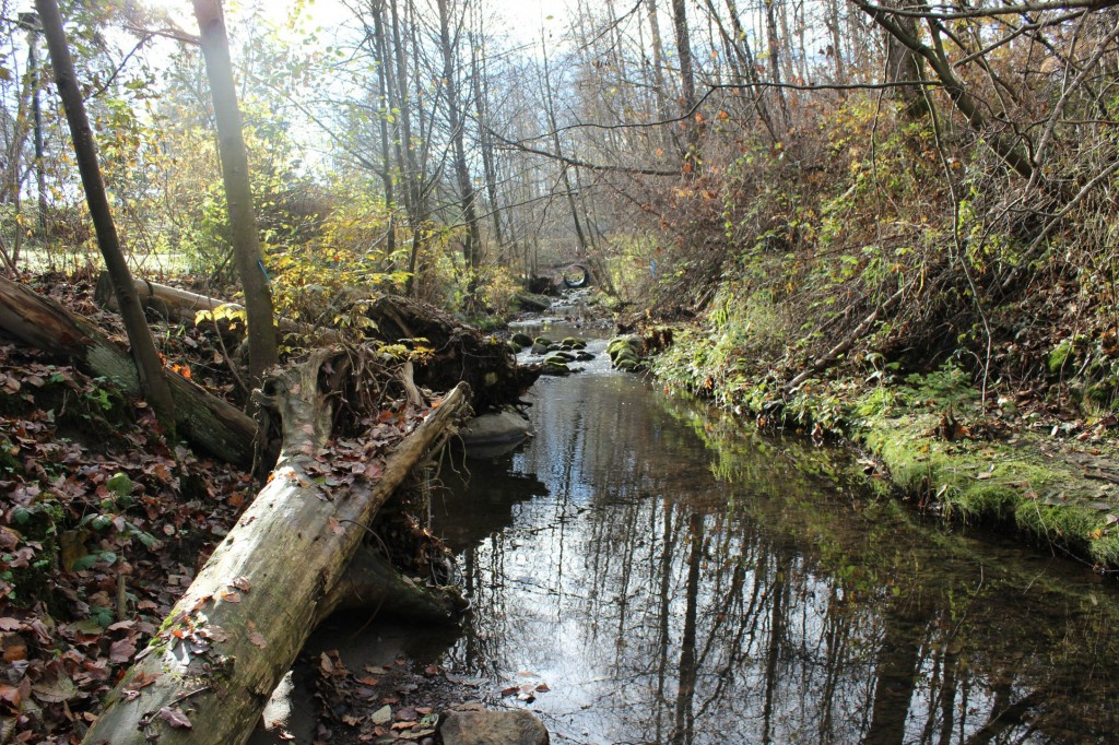 Guichon Creek at the South end of campus after restoration efforts.