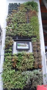 25feet tall exterior green wall at BCIT