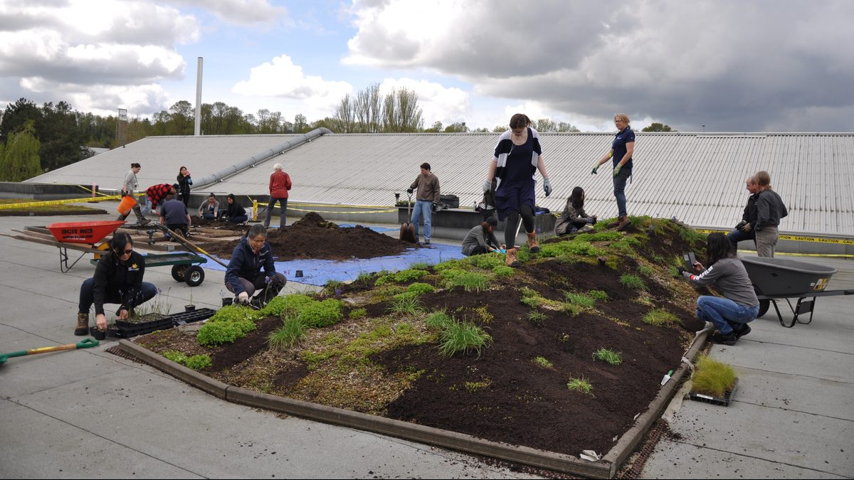 BCIT volunteers at work on the Elevated Lab on the roof of the on the BCIT Centre for Ecology.. The event took place to celebrate Earth Day 2017.