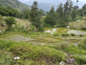 Nepal - rice fields