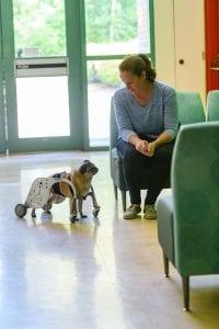 BCIT Dog Wheelchair